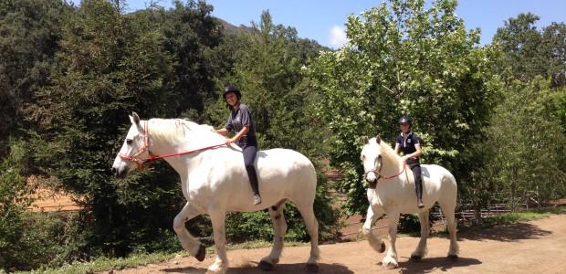 Gallery - Big Horses
